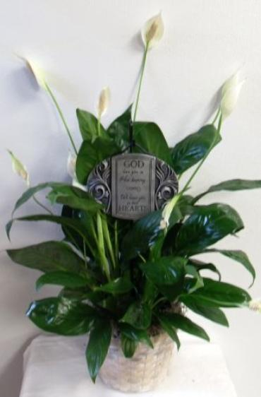 AF Peace Lily with Memorial Plaque
