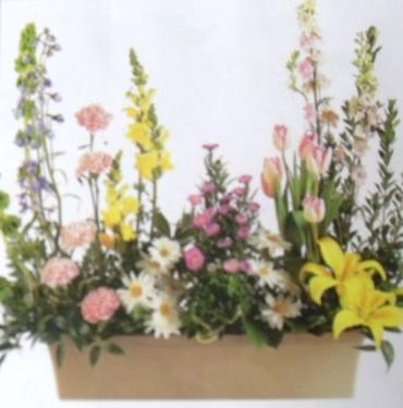 AF Window Box Arrangement