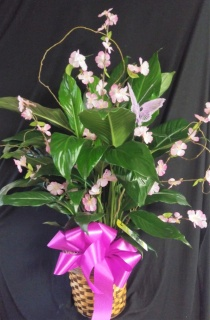 AF Decorative Peace Lily With Butterfly