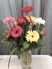 AF Gerbera Daisy Arrangement with Daisy Vase