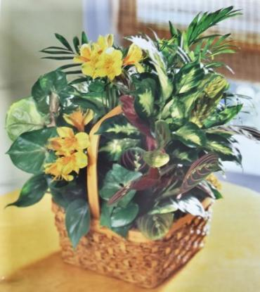 Assorted Basket Planter with Fresh