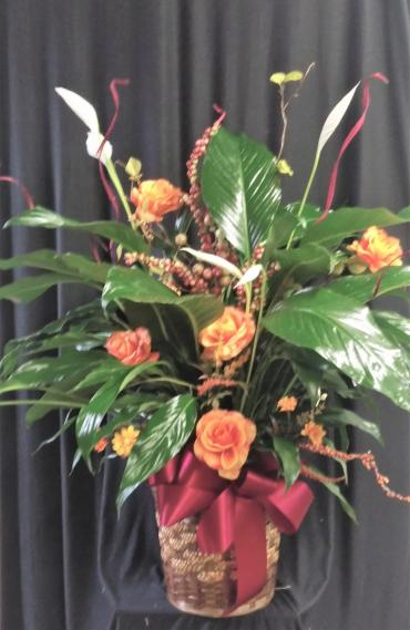 AF Fall Assortment Peace Lily