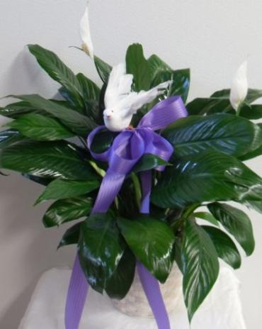 AF Peace Lily with Dove
