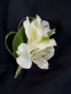Lily Bout (White)