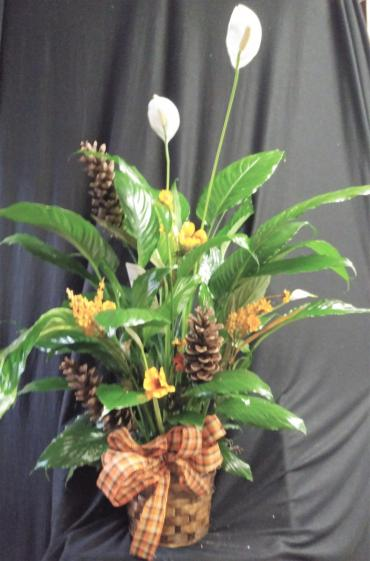 AF Fall Peace Lily