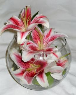 Bubble Bowl with Stargazer Lilies